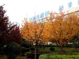 """陕西职业技术学院全力推进信息化建设打造""""智慧校园"""""""